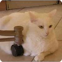 Adopt A Pet :: Kidzer - Scottsdale, AZ