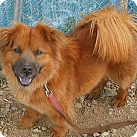 Adopt A Pet :: Angel - dewey, AZ