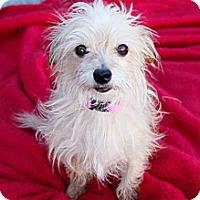 Adopt A Pet :: Annabeth - West Richland, WA