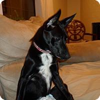 Adopt A Pet :: Velvet SPECIAL NEEDS - Allentown, PA
