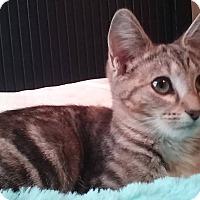 Adopt A Pet :: Jade - McDonough, GA