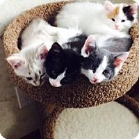 Adopt A Pet :: Winston - Byron Center, MI