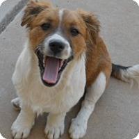 Adopt A Pet :: Rice - dewey, AZ