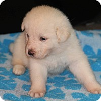 Adopt A Pet :: Frosty - Huntsville, AL