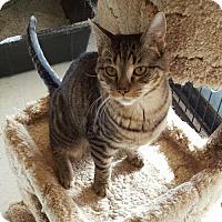 Adopt A Pet :: Eva - Hollywood, MD