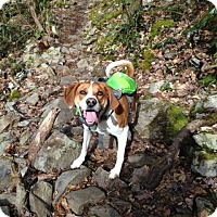 Adopt A Pet :: Ellie Mae - Bristol, TN