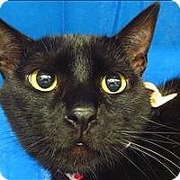 Adopt A Pet :: Nines - Sherwood, OR