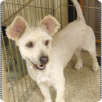 Adopt A Pet :: Lucky - Las Vegas, NV