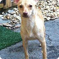 Adopt A Pet :: Big Mama - Concord, NC