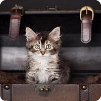 Adopt A Pet :: Phoebe - Salt Lake City, UT