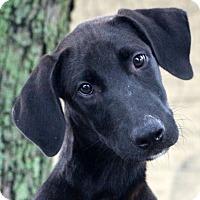 Adopt A Pet :: Scuba Steve - Glastonbury, CT