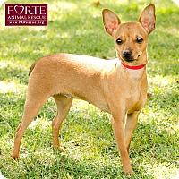 Adopt A Pet :: Honeydew - Marina del Rey, CA