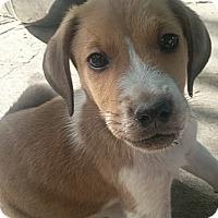 Adopt A Pet :: Christofer - Ogden, UT