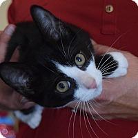 Adopt A Pet :: Goofy - Surrey, BC