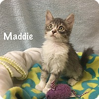 Adopt A Pet :: Maddie - Foothill Ranch, CA
