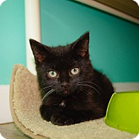 Adopt A Pet :: Maxwell - THORNHILL, ON