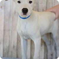Adopt A Pet :: Charming - Waldorf, MD