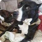 Adopt A Pet :: CORINA
