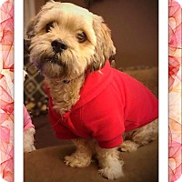 Adopt A Pet :: Adopted!!Nicholas - IL - Tulsa, OK