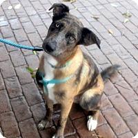 Adopt A Pet :: Sunny (dog) - Portland, IN