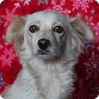 Adopt A Pet :: Cupcake - Phelan, CA