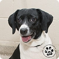 Adopt A Pet :: Sissy - Troy, OH