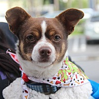 Adopt A Pet :: Mighty Mouse-ADOPT Me! - Redondo Beach, CA