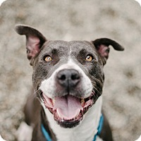 Adopt A Pet :: Faith - Los Angeles, CA