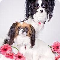 Adopt A Pet :: REBECCA - Pt. Richmond, CA
