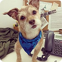 Adopt A Pet :: Frankie - Los Angeles, CA