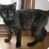 Adopt A Pet :: Penny - Byron Center, MI