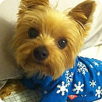 Adopt A Pet :: Simon (Fendi) - Phoenix, AZ