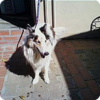 Adopt A Pet :: Casey - Riverside, CA