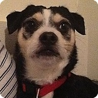 Adopt A Pet :: MR GIBBS - Portland, OR