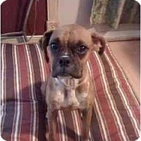 Adopt A Pet :: Nola - Gainesville, FL