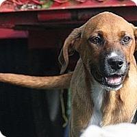Adopt A Pet :: Lottie - 300$ adoption fee!  L - Brattleboro, VT