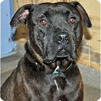 Adopt A Pet :: Jiggs - Port Washington, NY