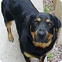 Adopt A Pet :: Aja - Gilbert, AZ
