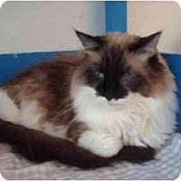 Adopt A Pet :: Keykey - El Cajon, CA