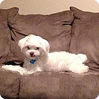 Adopt A Pet :: Kiwi - Saskatoon, SK