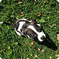 Adopt A Pet :: Wrangler - LaGrange, OH