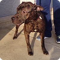 Adopt A Pet :: Oliver - Trenton, NJ