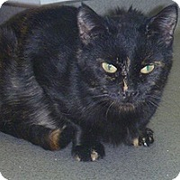 Adopt A Pet :: Tidbit - Hamburg, NY