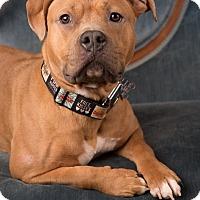 Adopt A Pet :: Kiwi - Salem, OR