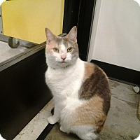 Adopt A Pet :: Nala - Plainville, MA