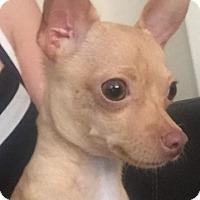 Adopt A Pet :: Alexander - Las Vegas, NV