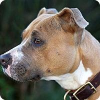 Adopt A Pet :: Squish - Berkeley, CA