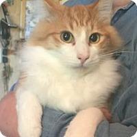 Adopt A Pet :: K-Apple4-Jimmie - Colorado Springs, CO