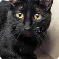 Adopt A Pet :: Mya - Oswego, IL