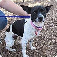 Adopt A Pet :: NORI - Phoenix, AZ